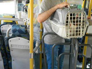 Direitos no transporte público - Os pets podem ser levados nos ônibus